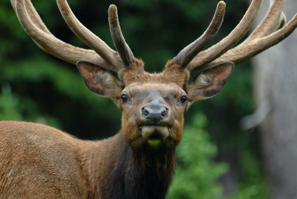 Visitors Guide - Estes Park, Grand Lake, Moab & Winter Park