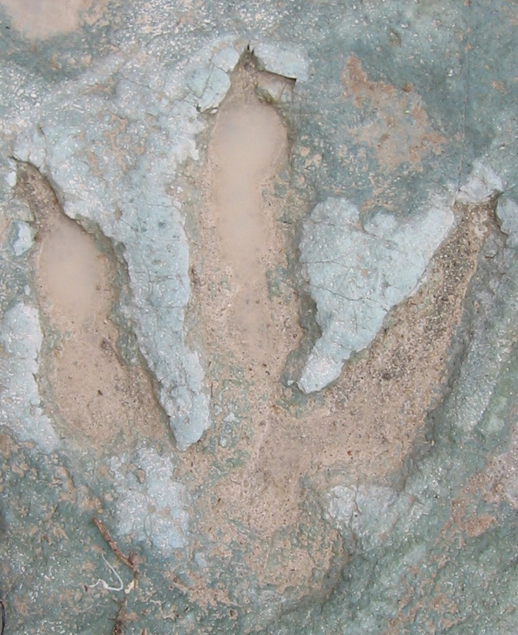Moab Dinosaur Tracks